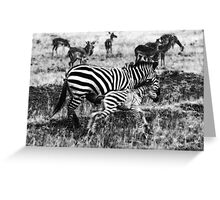 Plains zebra mother with calf Greeting Card