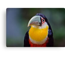 Red Breasted Toucan Canvas Print