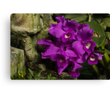 Freshly Watered Violet Orchids Canvas Print