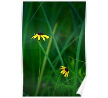 Blackeyed Susans Poster