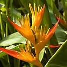 Bird of Paradise by SusanAdey