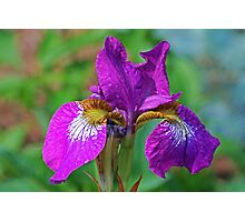 Elegant Purple ! Photographic Print