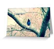 Blue Jays II Greeting Card