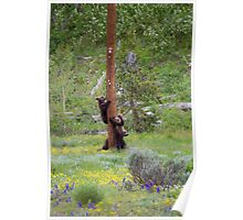 Grizzly Bear Cubs on Pole Poster