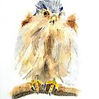 Portrait of Kestrel Chick by Colin Shepherd