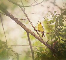 Summer Finch by KBritt