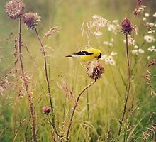 Life in the Meadow by KBritt