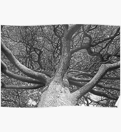 Tangled Branches Poster