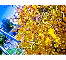 Nature, yellow and blue. Photographic Print