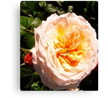 Governor General's Roses  #15 Canvas Print