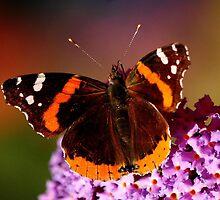 BUTTERFLY ON MY BUTTERFLY BUSH by RoseMarie747