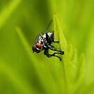A fly about to fly by Seth LaGrange
