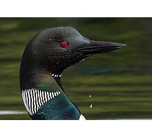 Common Loon Portrait Photographic Print