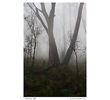 Cleland in Fog Photographic Print