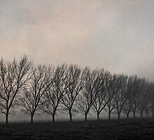 One Foggy Morning by Robyn Carter