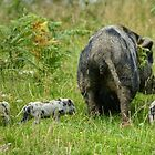 A Family Outing by Jamie  Green