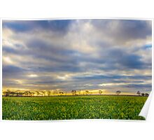 Canola Fields Poster