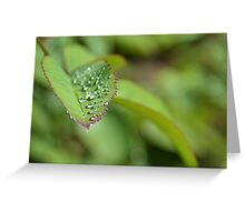 Drops on a leaf Greeting Card