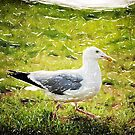 Seagull Walking by Phil Perkins