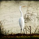 Egret, Copi Hollow by Linda Lees