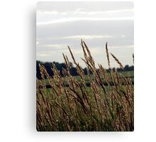 Grass Waving in the Wind Canvas Print