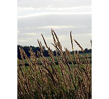 Grass Waving in the Wind Photographic Print