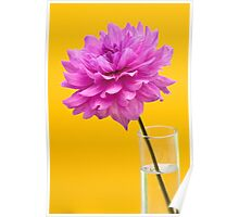 Pink Dahlia in Vase with Yellow Orange Background Poster