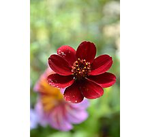 Bokeh Beauty Photographic Print