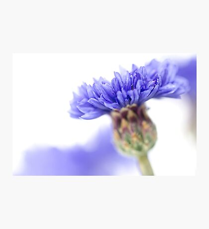 Blue Beauty..... (3) Photographic Print