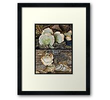 """Two Members of the """"Parchment Family"""" Fungi Framed Print"""
