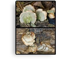 "Two Members of the ""Parchment Family"" Fungi Canvas Print"