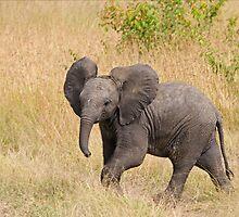 Baby Elephant by Valerija S.  Vlasov