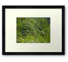 Lying low on a hot & humid day I Framed Print