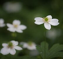 Featured in 'Wildflowers of North America' – 14 January 2014