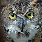 Magellan Eagle Owl by JenniferLouise
