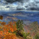 Autumn At The Grand Canyon  by K D Graves Photography
