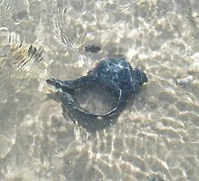 The Black Seashell by MotherNature