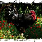 Rufus The Rooster by Penny Odom
