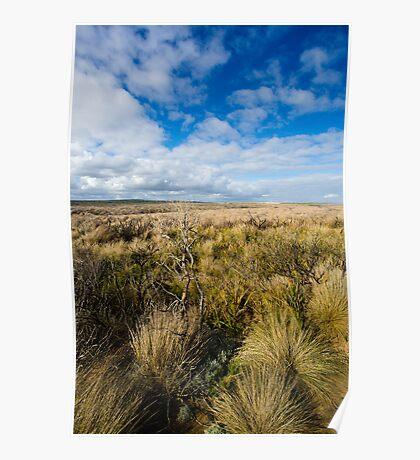 Grass... Poster