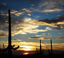 Southern Arizona Sunset by Kimberly Chadwick