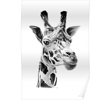 Giraffe in Pencil Poster