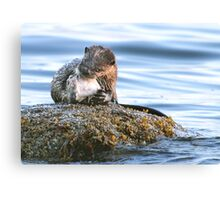 Otter with Flounder Canvas Print
