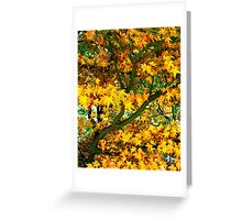 Tree in Autumn colour Greeting Card