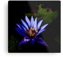 Water Lily - Square Metal Print