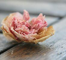 Faded rose II by LynnEngland