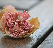 Faded rose III by LynnEngland