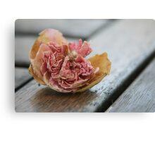 Faded rose III Canvas Print