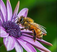 honey bee by Helenvandy