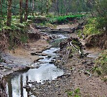Mullum Mullum Creek  by Adam Le Good
