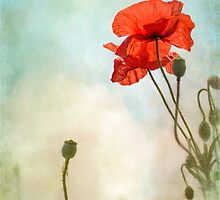 standing tall by Teresa Pople